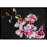 """Картина с кристаллами Swarovski """"Маленькая орхидея"""""""
