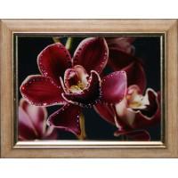 """Картина Сваровски """"Цветок орхидеи"""""""
